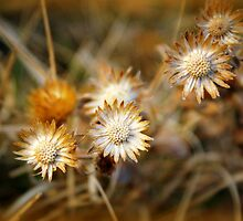 Straw Flowers by Leanna Lomanski