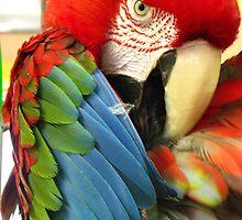 Green Winged  Macaw by Alymark