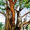 Avatar-Tall Timber - Nature in its Entirety(Nothing Man Made)*