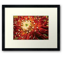 Dahlia - Nature's Radiance Framed Print