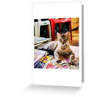 cat is sitting  Greeting Card