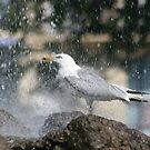 seagull gets a shower by hugbunny