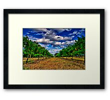 """Between The Vines"" Framed Print"