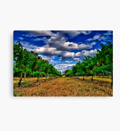 """Between The Vines"" Canvas Print"