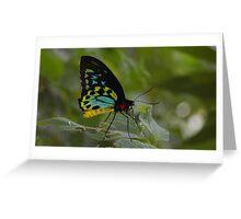 Cairns birdwing butterfly Greeting Card
