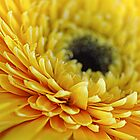 Yellow Flower by INCITO