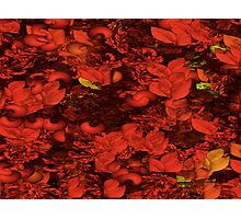 Red Tide Photographic Print
