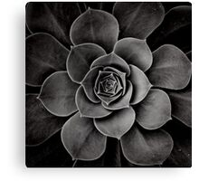 levels of plant Canvas Print