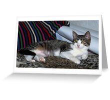 New Kitty song...Update Greeting Card