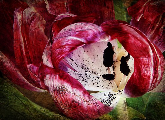 Requiem for a Tulip - Collaboration with monocotylidono by Johanne Brunet