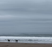 dogs playing in sea by nathanw08