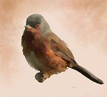Dartford Warbler by Bamalam Art and Photography