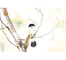 Bird Camouflaged By An Overcast Sky Photographic Print