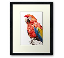 ara macaw parrot on its perch Framed Print