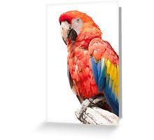 ara macaw parrot on its perch Greeting Card