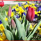 Magnificent flower bed by daffodil