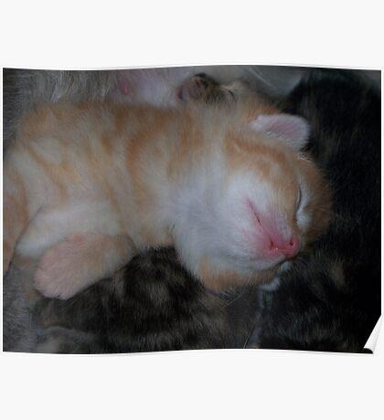 Sleeping 2 Poster