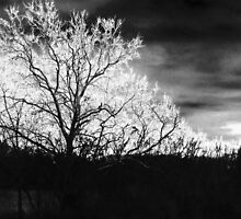 The Trees by solareclips~Julie  Alexander