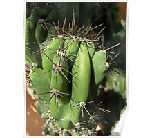 Cactus Close-up 1 Poster