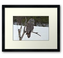Magnificent Great Grey Owl Framed Print