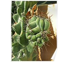 Cactus Close-up 3 Poster