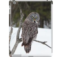 Magnificent Great Grey Owl iPad Case/Skin