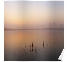 Dawn Mist - New Forest Poster