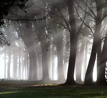 First Fog For Fall... by Darqfyre