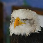 Eagle Height`s  by davesphotographics