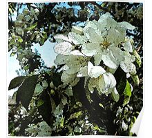 Spring white blossoms, tree art, watercolor, impressionism Poster
