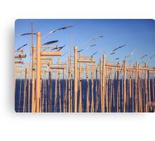 SCULPTURES BY THE SEA BONDI BEACH #2 Canvas Print