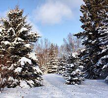 Fresh Snow by Teresa Zieba