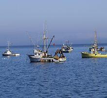 Safe Harbor by Steve Hunter