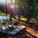 Morning In The Park by Steven  Siow