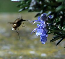 Rosemary and the beefly by Sharon Perrett