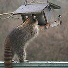 That's MY bird food! by Alice Kahn