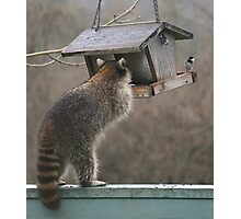 That's MY bird food! Photographic Print
