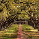 Oak Alley by steini