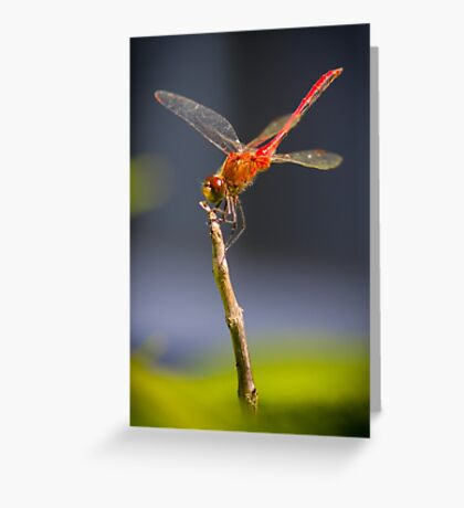 Dragonfly in the summer Greeting Card