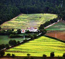 Fields by gluca