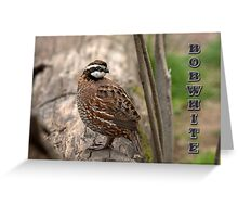 Bobwhite II Greeting Card