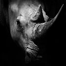 Rhino by Craig Mitchell