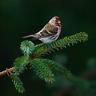 Spruce Ornament by DJ LeMay