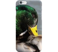 Mallard Drake iPhone Case/Skin