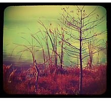 Bush by the Water ttv Photographic Print