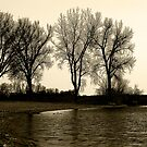 Lake shore by photo36