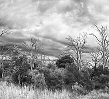 Untilted Landscape by MickDodds