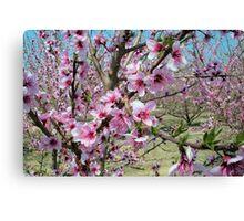 Peach Time Canvas Print