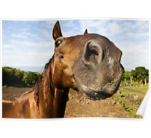 Inquisitive horse Poster