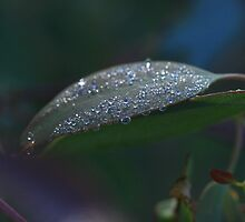 April - silver morning dew by Mereki